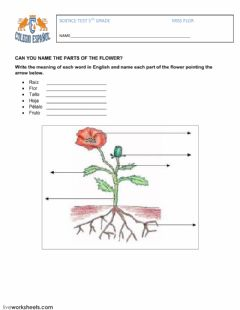 Interactive worksheet parts of a flower-bugs and insects