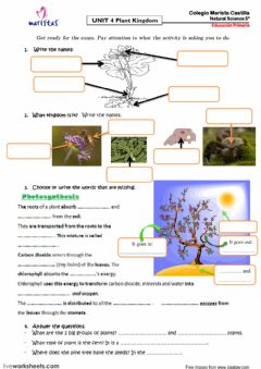 Interactive worksheet Plant Kingdom