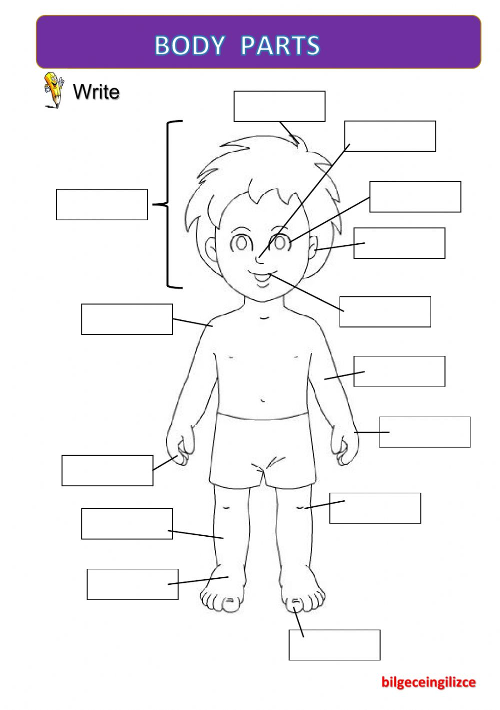 Worksheets Worksheet-body-parts body partswith video interactive worksheet text
