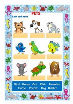 Interactive worksheet PETS (with video) drag and drop exercise