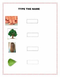 Interactive worksheet TYPE THE NAME