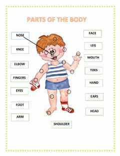 PARTS OF THE BODY worksheet preview