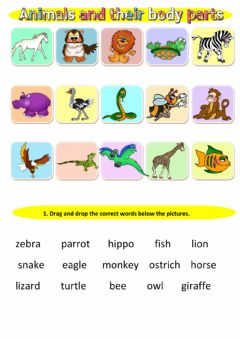 Animals and their body parts worksheet preview
