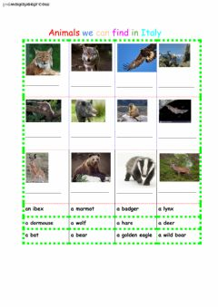 Interactive worksheet Animals in Italy