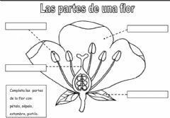 Interactive worksheet Partes de una flor (1)