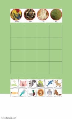 Interactive worksheet Animal body covering