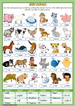 Ficha interactiva Animals and their babies