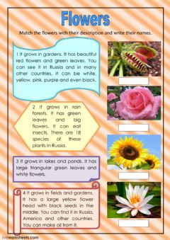 Interactive worksheet Flowers