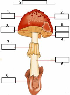 Interactive worksheet Mushroom Diagram
