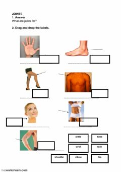 Ficha interactiva Joints, muscles, bones and stages of life