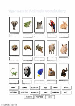 Interactive worksheet Names of the animals