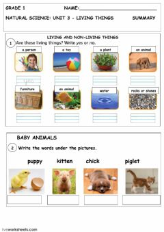 Living and non-living things worksheet preview