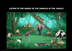 Ficha interactiva LOOK AT THE ANIMALS IN THE JUNGLE