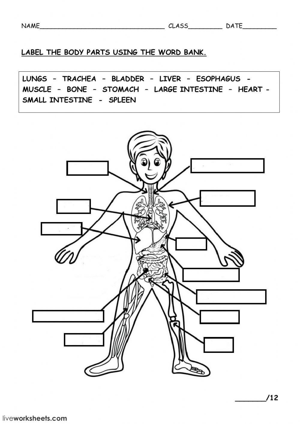 The Human Body Interactive Worksheet