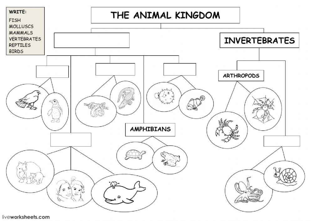 The Animal Kingdom Classification Diagram Animal Classification