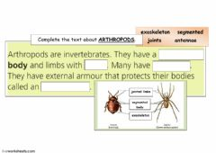 Interactive worksheet arthropods