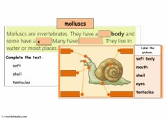 Interactive worksheet molluscs
