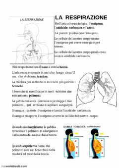 Interactive worksheet RESPIRAZIONE