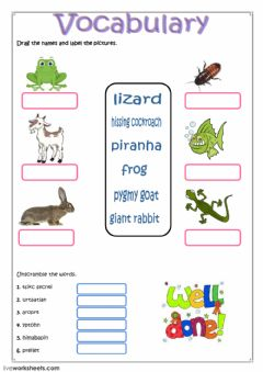 Ficha interactiva Vocabulary