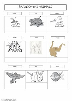 Interactive worksheet Parts of the animals
