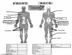 Interactive worksheet Muscles
