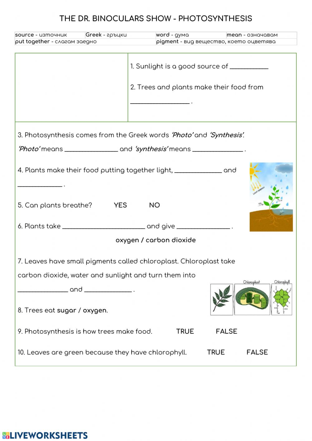 Photosynthesis Interactive worksheet