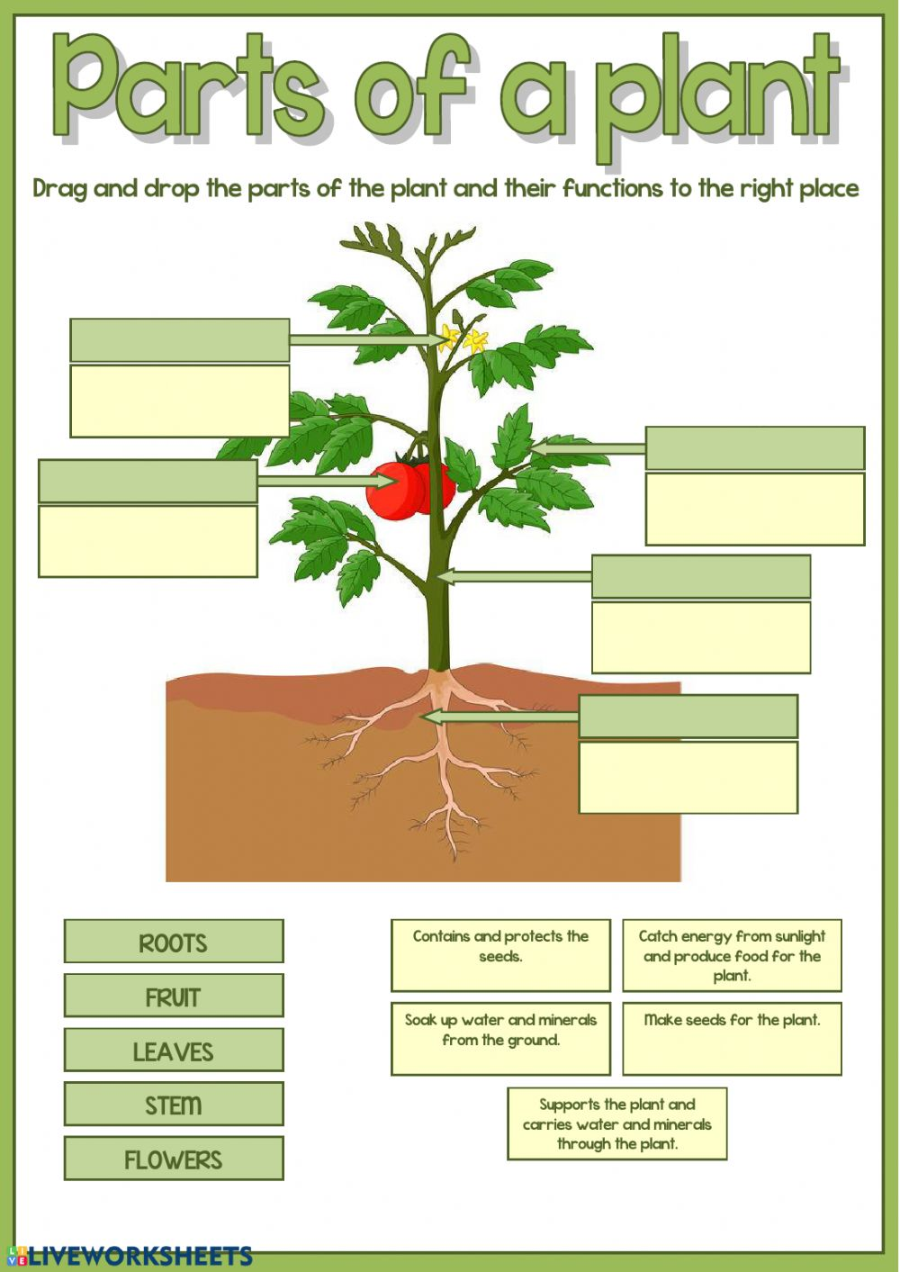 Parts of a plant worksheet