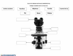 Interactive worksheet Partes del microscopio