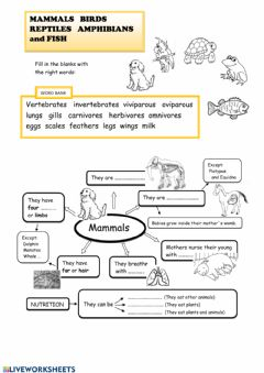 Interactive worksheet Mammals, birds, reptiles, amphibians and fish