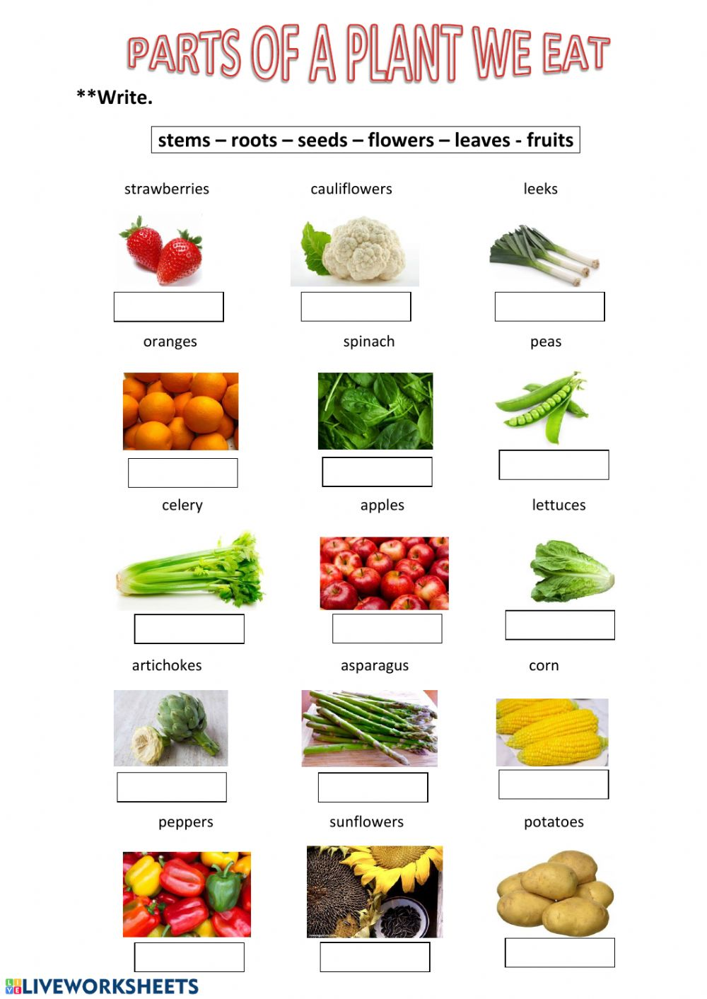 Parts Of A Plant We Eat Worksheet