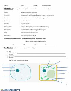 Interactive worksheet Cells