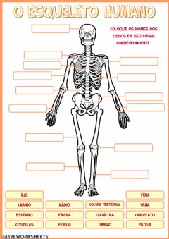 Interactive worksheet O esqueleto humano