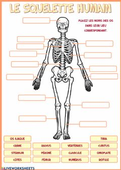 Interactive worksheet Le squelette humain