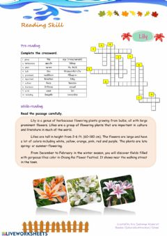 Interactive worksheet Lily