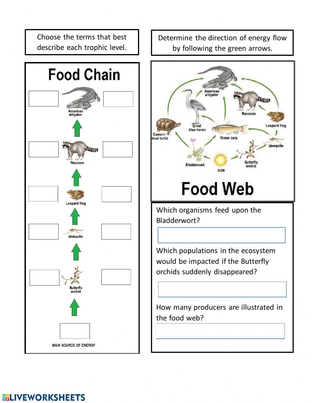Live Work Sheet: Energy Flow in Ecosystems worksheet