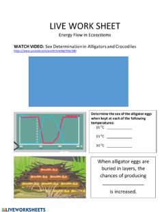 Interactive worksheet Live Work Sheet: Energy Flow in Ecosystems