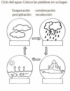 Interactive worksheet Ciclo del agua