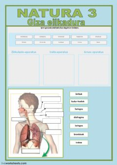Interactive worksheet N3