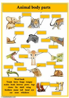 Interactive worksheet Animal body parts