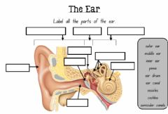 Interactive worksheet Sounds (The Ear)