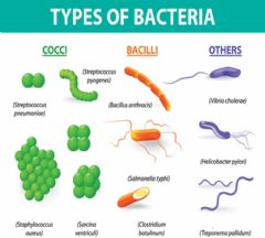 Interactive worksheet Bacteria Science name