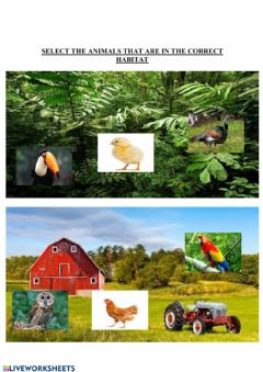 Interactive worksheet Habitat birds