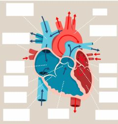 Interactive worksheet Parts of the heart