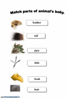 Interactive worksheet Animal's parts of the body