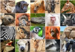 Interactive worksheet Animales