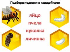 Interactive worksheet Пчела1