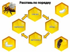 Interactive worksheet Пчела2