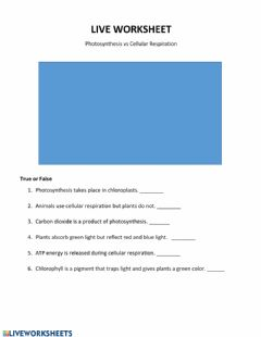 Interactive worksheet Live Work Sheet: Photosynthesis vs Cellular Respiration
