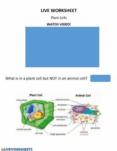 Interactive worksheet Live Work Sheet- Plant Cell