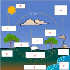 Interactive worksheet Carbon Cycle Practice